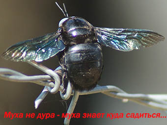 На круглом столе погибли мухи